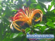 Jardin Botanico Credia La Ceiba Honduras