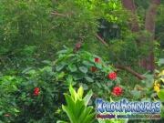 Credia La Ceiba Honduras