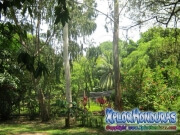 Credia jardin botanico La Ceiba Honduras