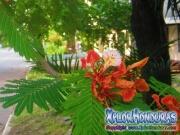 Flor de Malinche