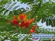 Llama del Bosque Flor