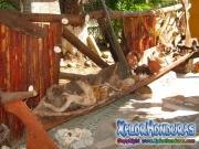 corozal-atlantida-honduras-10