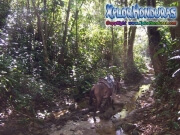 mosquitia aventura La Reserva de la Biosfera de Rio Platano honduras moskitia