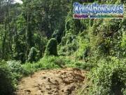mosquitia jungle La Reserva de la Biosfera de Rio Platano honduras moskitia