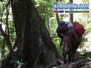mosquitia La Reserva de la Biosfera de Rio Platano honduras transporte moskitia