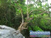 la-ensenada-tela-atlantida-honduras-27