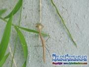 insecto-matapiojos