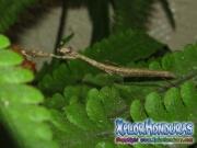 Mantis Religiosa Insecto