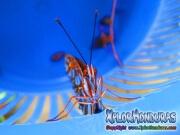 Butterfly Agraulis Vanillae