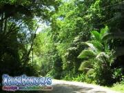 parque nacional pico bonito, rio cangrejal, camino a zona turistica la cuenca