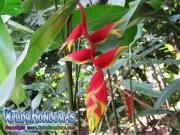 parque nacional pico bonito, rio cangrejal, naturaleza en parque nacional nombre de dios flores