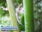parque nacional pico bonito, rio cangrejal, naturaleza en parque nacional nombre de dios insecto raro