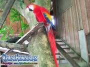 parque nacional pico bonito, rio cangrejal, ara macao en hotel jungle river lodge