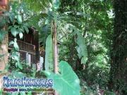 parque nacional pico bonito, rio cangrejal, cabañas hotel jungle river lodge