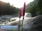parque nacional pico bonito, rio cangrejal, rio, rocas grandes y flores