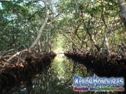 Roatan, Islas de la Bahia, Honduras, bosque de mangle