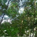 Bosque tropical la muralla