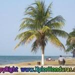 Paseo de los ceibeños la Ceiba honduras