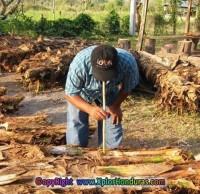 Vino de Coyol bebida Tipica departamento de Olancho Honduras