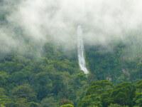 Al Rumor de Las Selvas Hondurenas