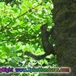 ardilla en jardin credia La Ceiba