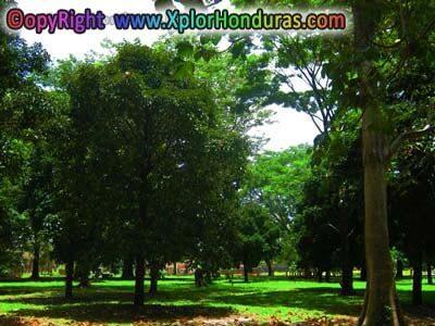bosque de clima tropical lluvioso