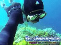 Buceo Libre Freediving Apnea en Honduras