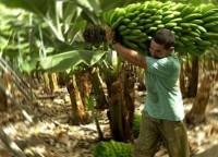 El Bananero Lydia Handal Honduras