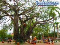 Fotos plaza parque central, centro La Ceiba
