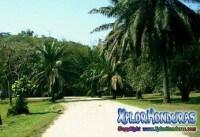 Jardin Botanico Lancetilla