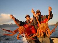 King Crab el Cangrejo Gigante de Honduras