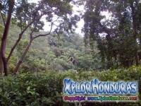 Montaña El Merendon Parque Nacional Cusuco