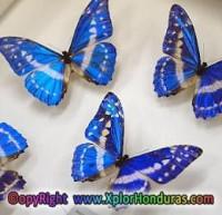 museo de la mariposa