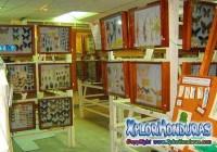 museo de la mariposa La Ceiba