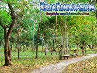 Parque Arqueologico Curruste San Pedro Sula Portada